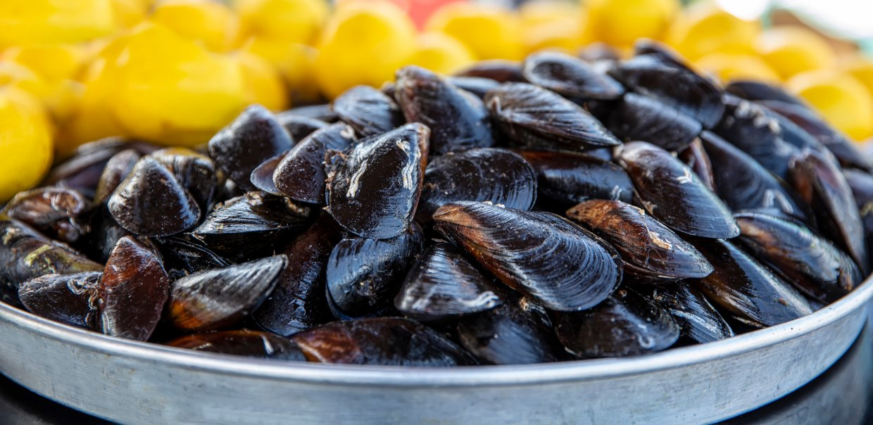 Cooked,Mussels ,Mussels,In,Lemon,Sauce ,Sea,Products ,Mussel,Shop,