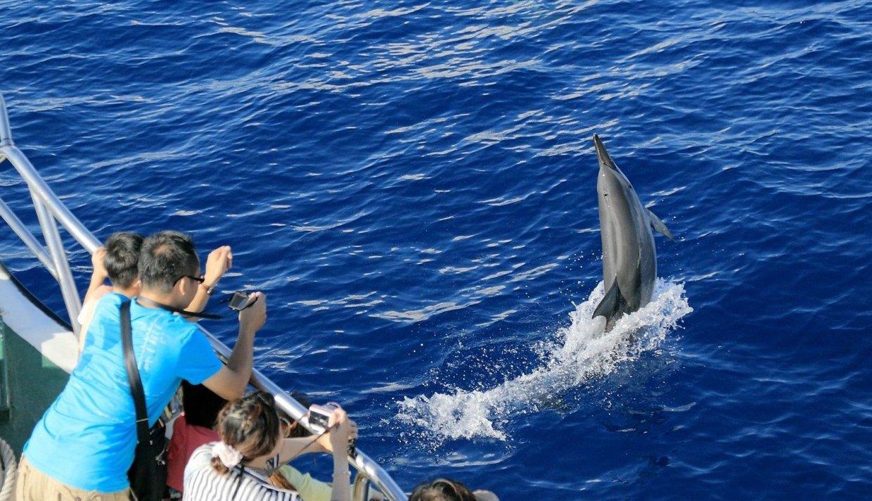 【圖十二】海洋教育 超值雙海洋套票 體驗難忘賞鯨之旅