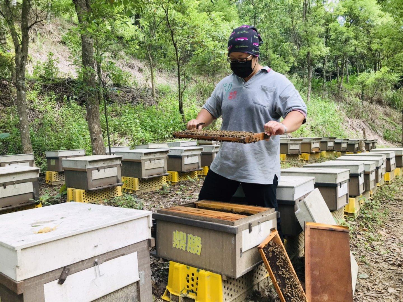 純正的台灣蜂蜜可以從5大部分來辨認!