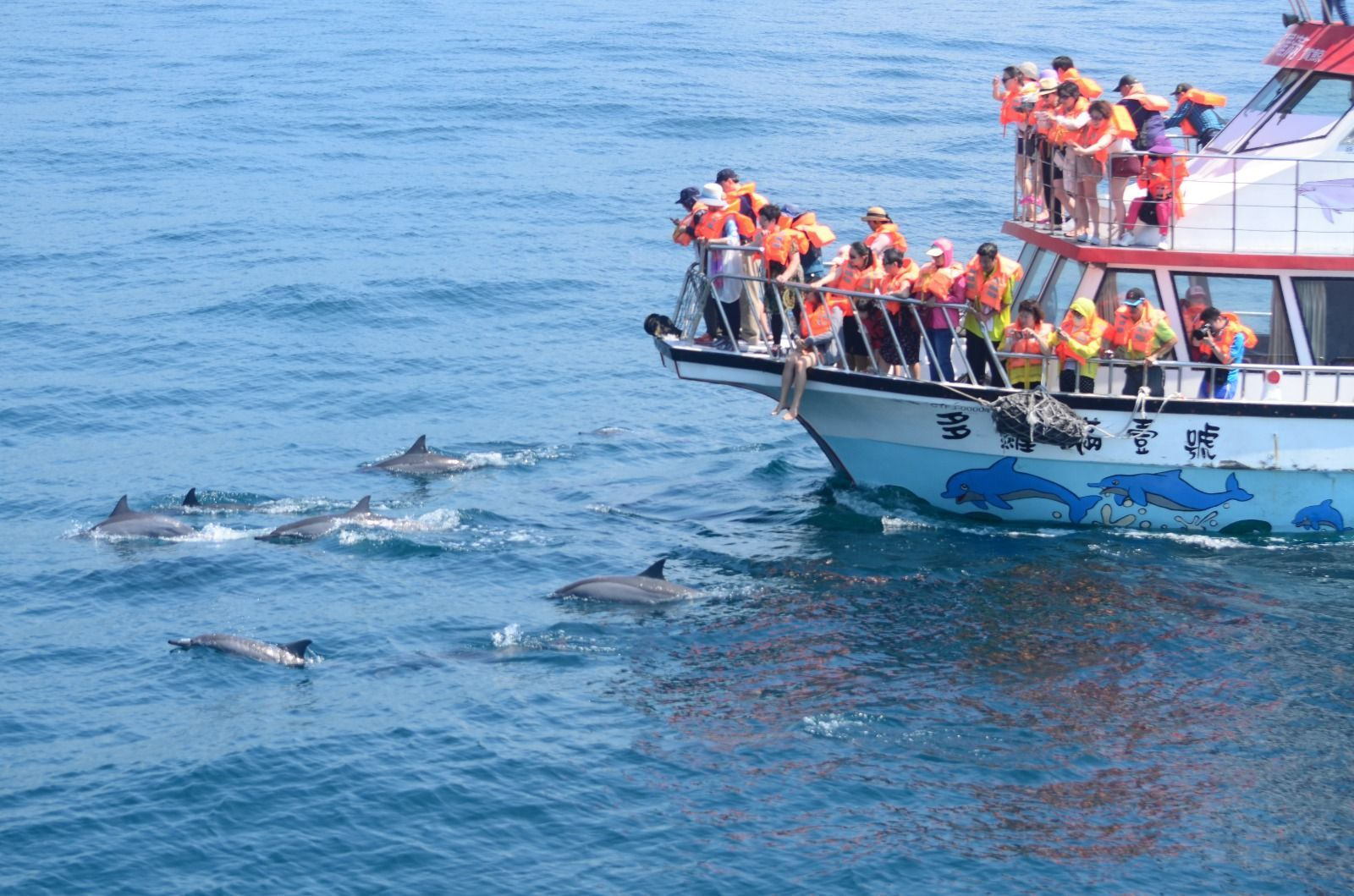 多羅滿賞鯨體驗