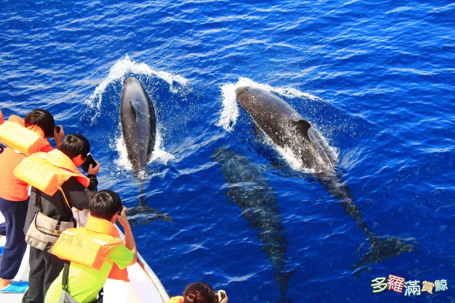 多羅滿賞鯨體驗2