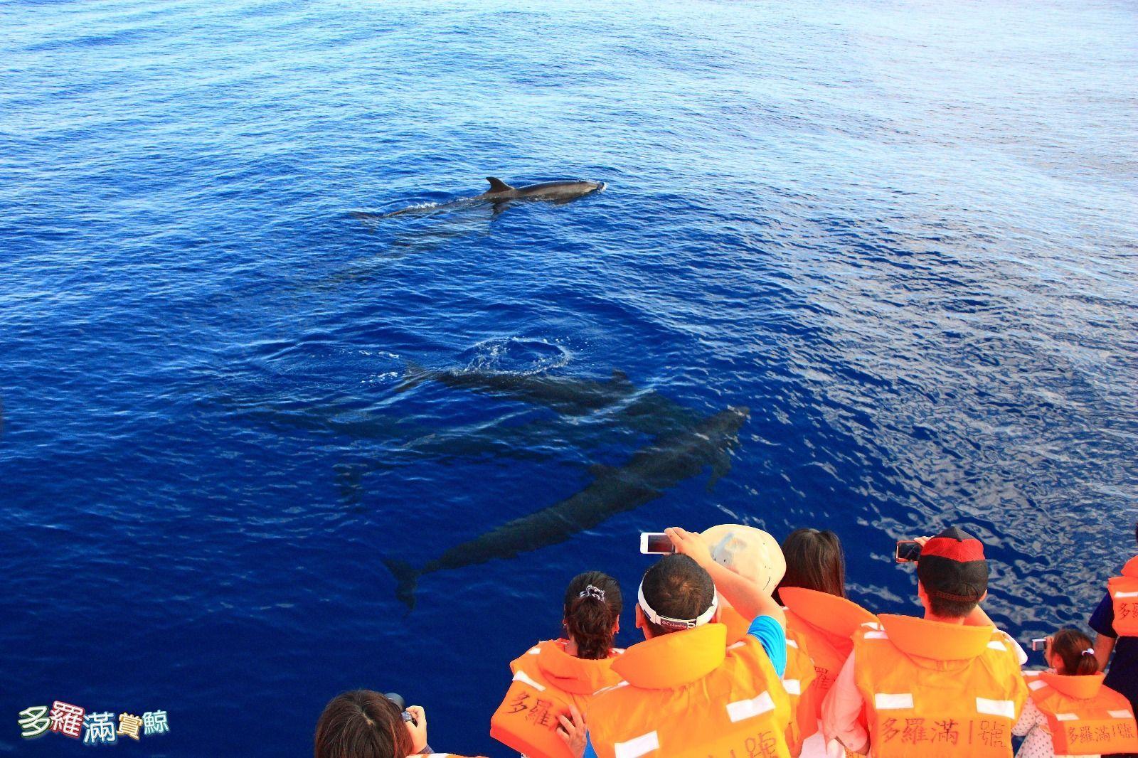 多羅滿賞鯨體驗3