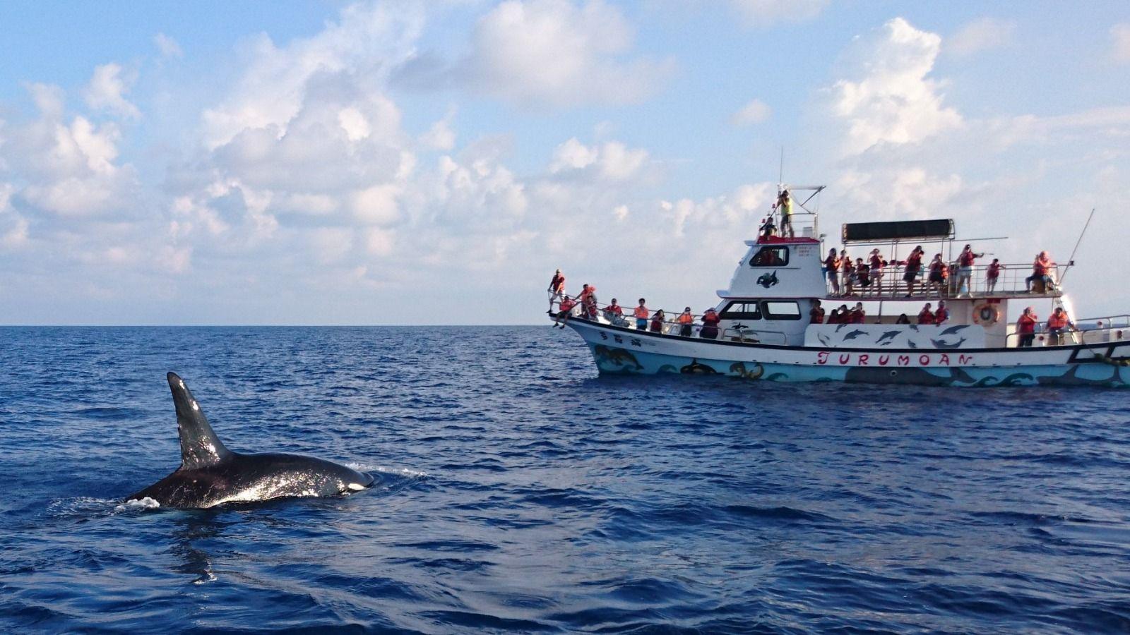 多羅滿賞鯨體驗4