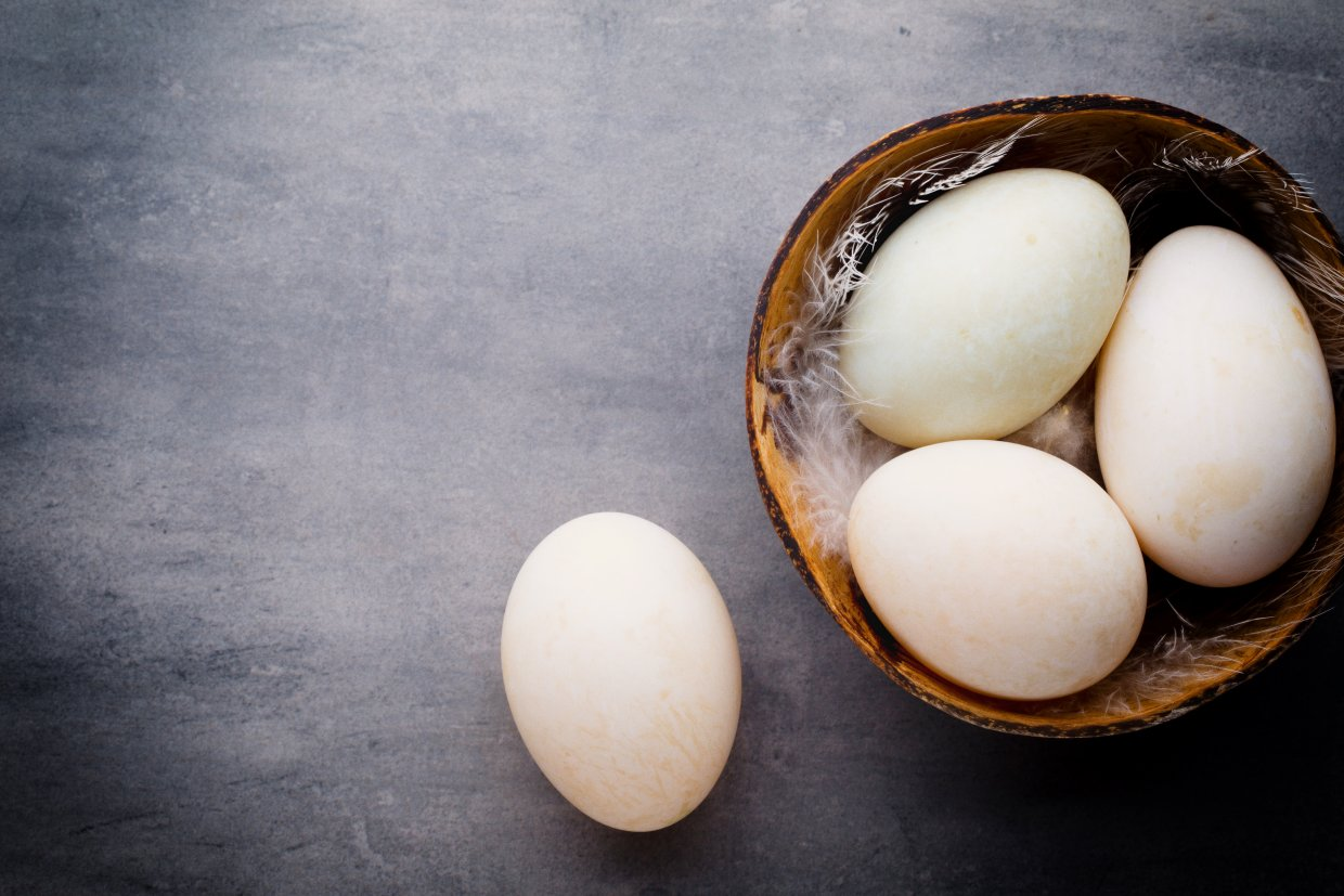 Duck,Eggs,On,A,Cage,Gray,Background