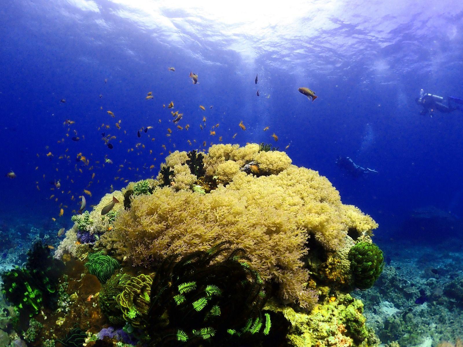 龍洞潛水3