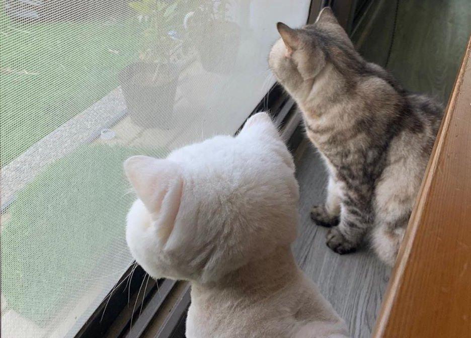 白貓民宿(臉書粉絲專頁)3