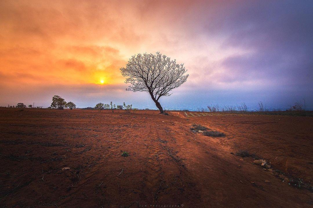 Aa8374tw 九天夕陽之樹