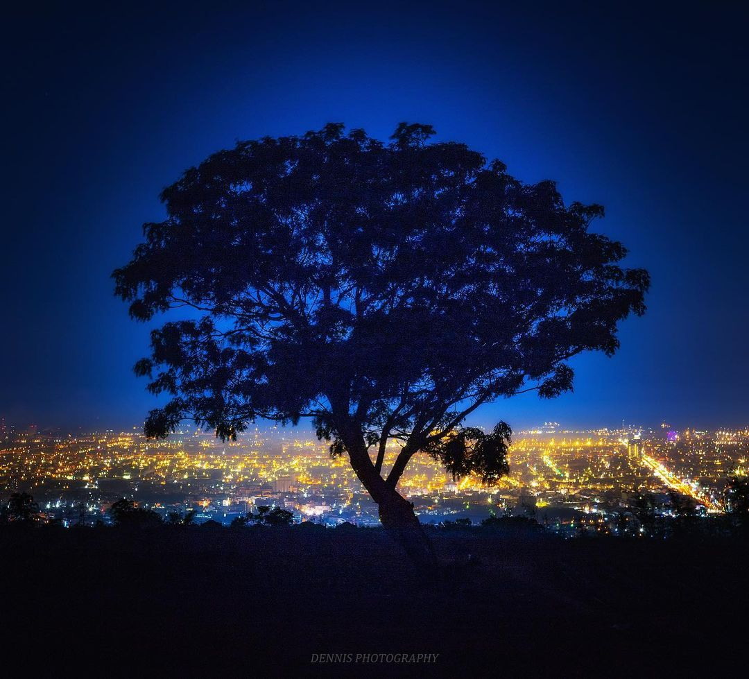 Hanjin0831 九天夕陽之樹