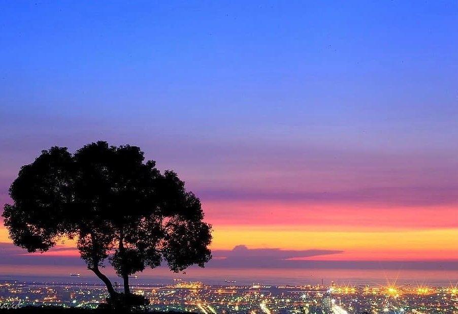 九天夕陽之樹david Lan1